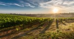 Agronegócio Itabirano: ações para o setor começam a acontecer