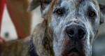 Ampari faz campanha de adoção de animais mestiços