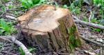 Moradores se manifestam contra corte de árvores. Secretaria diz que ação é rotina