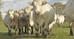 Instituto Mineiro de Agropecuária avalia cobertura de vacinas no gado da região