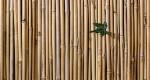 Artesanato em Bambu: Senar e sindicato rural promoveram curso a interessados