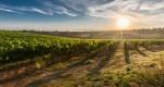 Agricultura pode diversificar economia de Itabira, afirma Emater